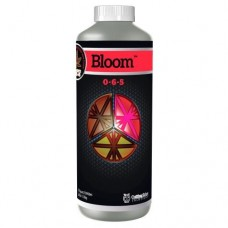 Cutting Edge Bloom     Quart
