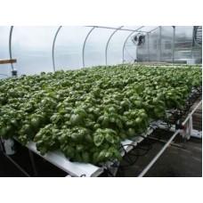 2012HL Complete System - Lettuce